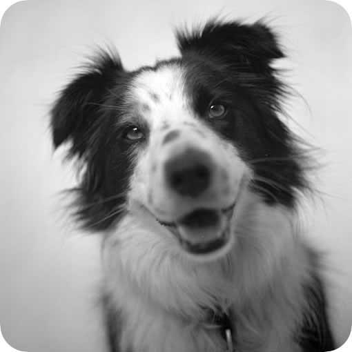 cachorro-feliz-petrede