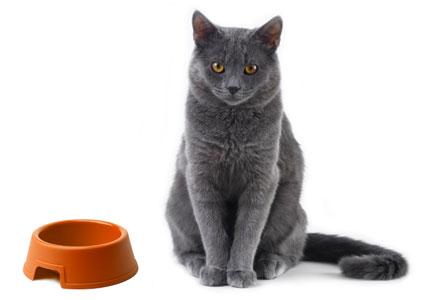 gato_comida