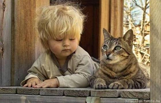 gato_bebe2