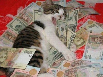 gato_dinheiro