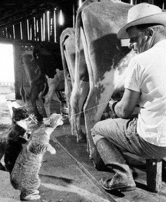 gato_leite