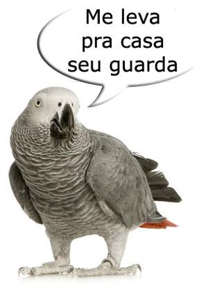 papagaio_africano