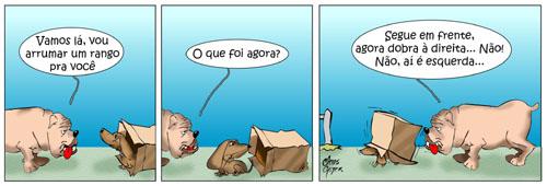 animais_de_rua07