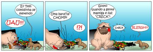 animais_de_rua09