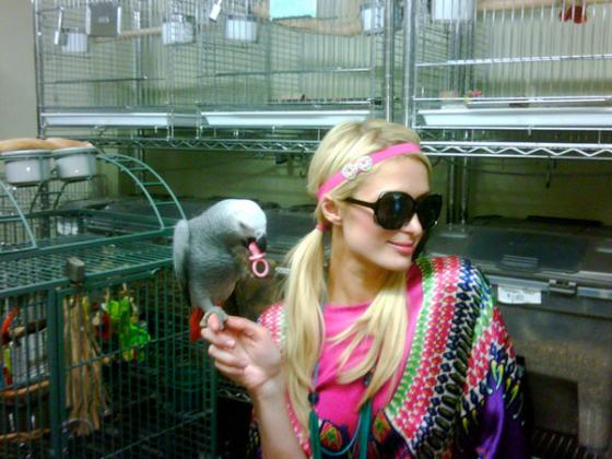 papagaio_paris