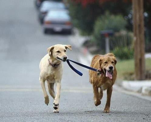 dogwalkdog