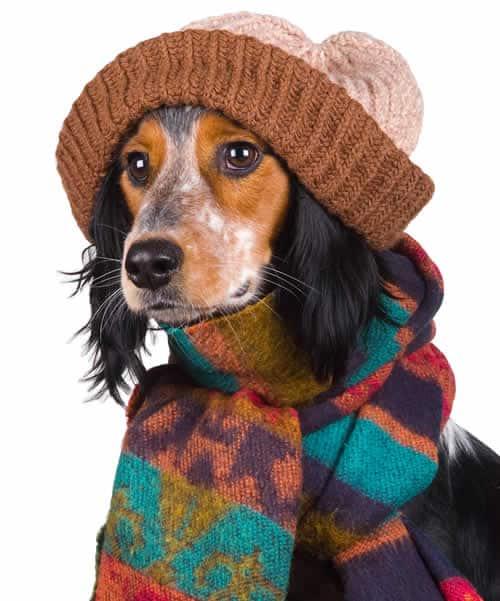 cachorro-com-roupa-de-inverno