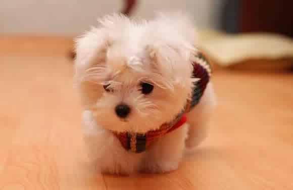 pet-rede-cachorrinho-muito-fofo