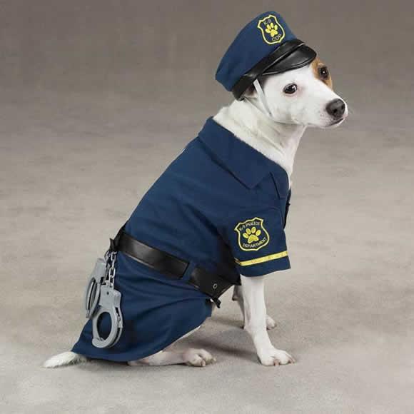 pet-rede-cachorro-policial