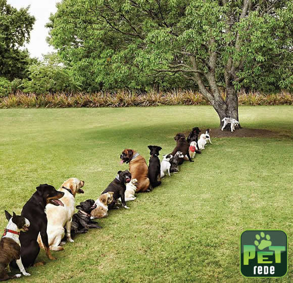 pet-rede-consequencias-do-desmatamento
