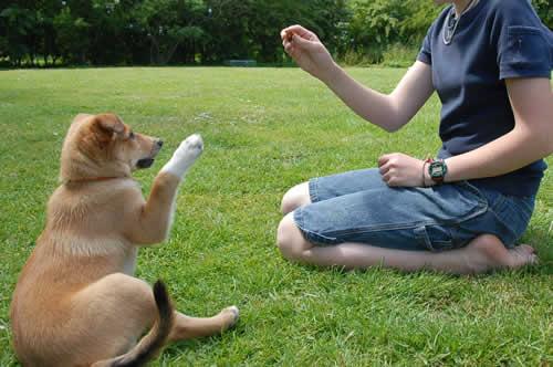 petrede-como-adestrar-meu-cachorro