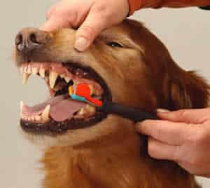 petrede-escovar-os-dentes