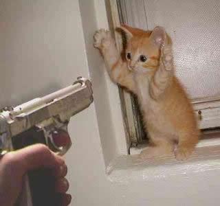 petrede-gato-arma