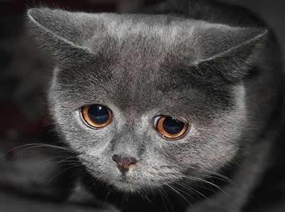 petrede-gato-olhar-triste