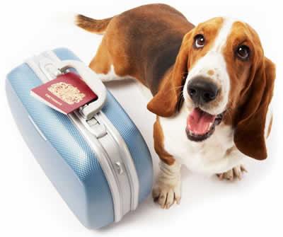 petrede-cachorro-viagem-mala