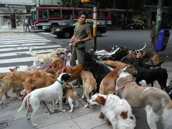 petrede-dogwalker