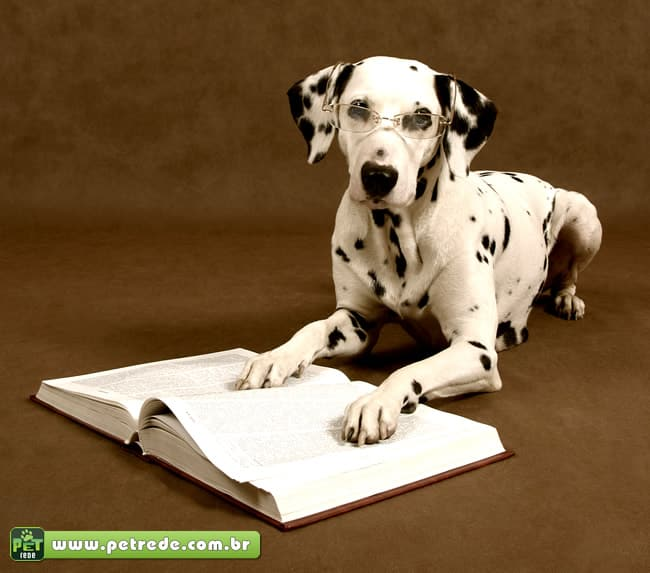 cachorro-dalmata-oculos-lendo-livro-estudo-inteligente-petrede