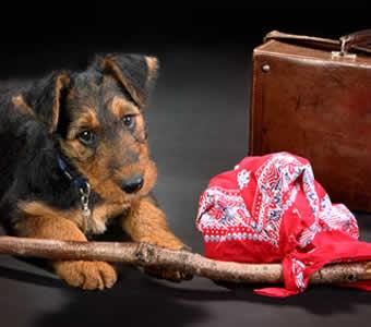 petrede-cachorro-mala-trouxa-viagem