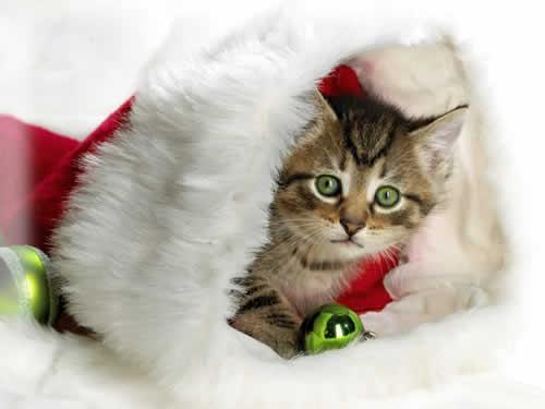 petrede gato presente natal Quando animais viram presentes de Natal