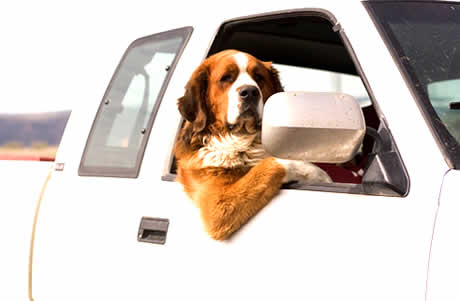 petrede-cachorro-na-janela-do-carro11