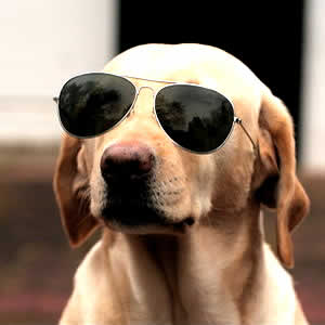 petrede-cachorro-oculos-escuros