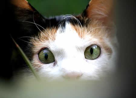 petrede-olhos-gato