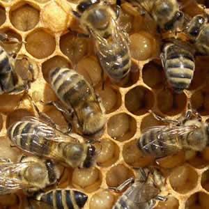 petrede-colmeia-abelhas