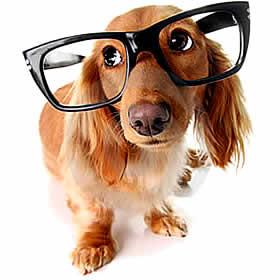 petrede-cachorro-de-oculos-inteligente