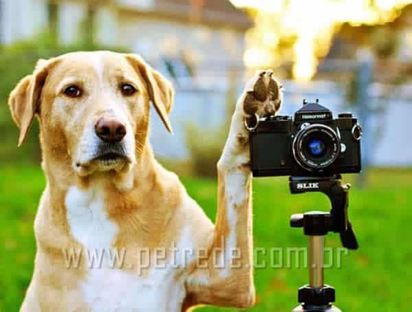 cachorro-com-maquina-fotografica-petrede