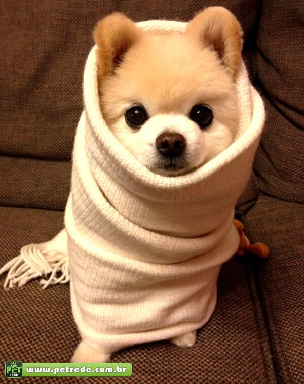 cachorro-frio-inverno-agasalho-temperatura-petrede