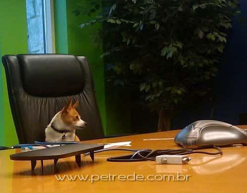 cachorro-escritorio-trabalhando-petrede