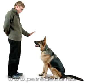 cachorro-adestrado-treinado-petrede