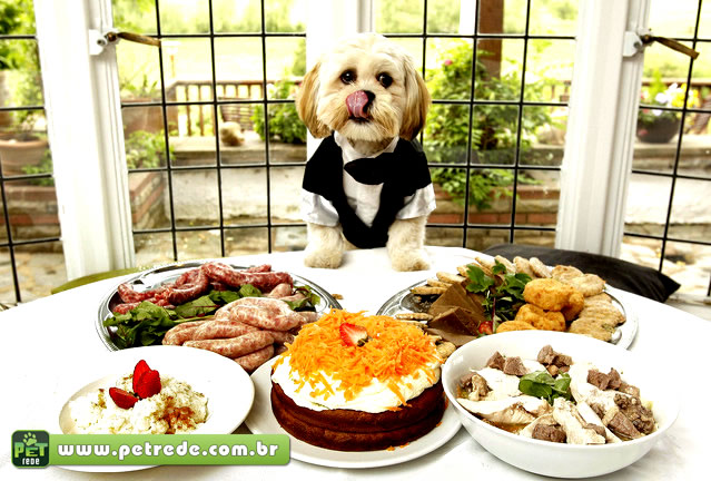 cachorro-comida-jantar-refeicao-almoco-banquete-alimento-petrede