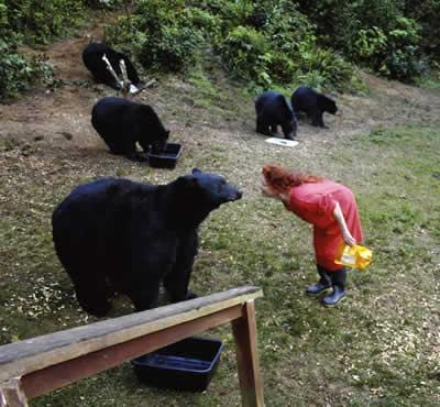 Karen Noyes vinha alimentando os ursos desde 2003 - Ilustração/Divulgação/The Oregonian/AP