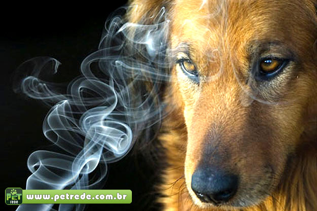 cachorro-cigarro-fumaca-petrede