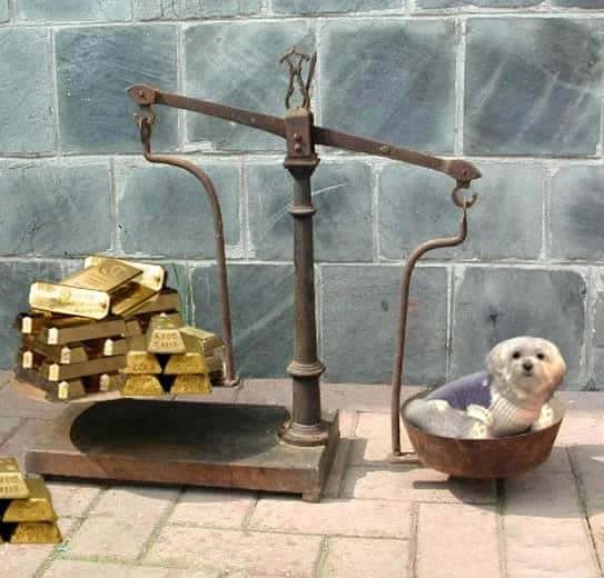cachorro-ouro-dinheiro-petrede
