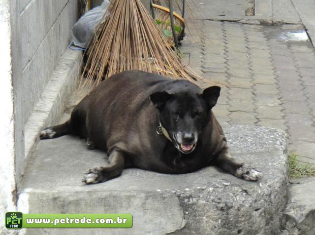 cachorro-gordo-petrede