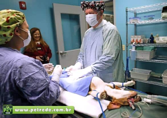 castracao-operacao-cirurgia-medico-hospital-veterinario-petrede