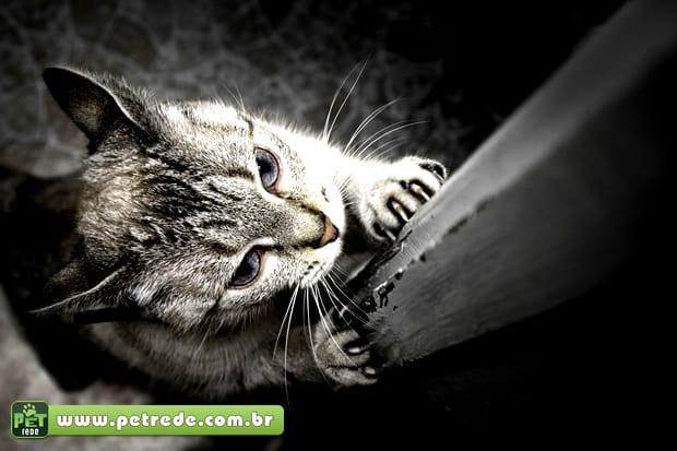 gato-arranhando-petrede