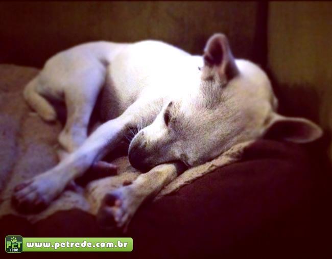 cachorro-doenca-triste-morte-enfermo-cinomose-petrede