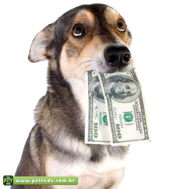cachorro-dinheiro-petrede