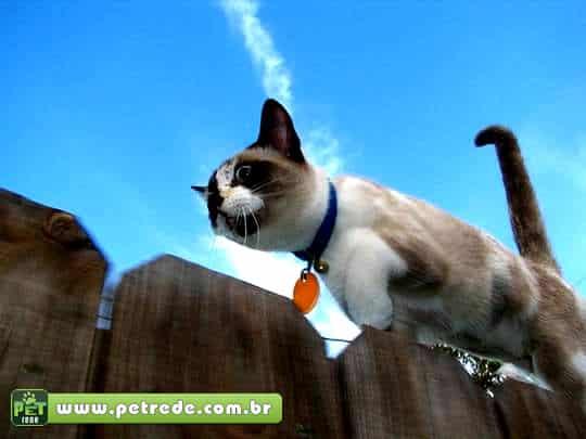 gato-andando-cerca-petrede