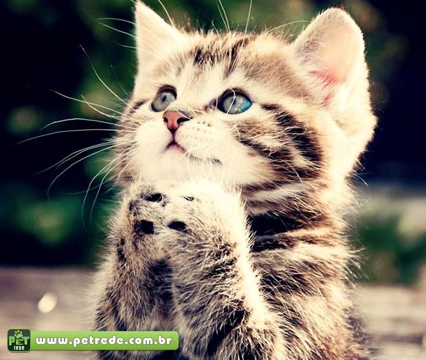 gato filhote pedindo petrede Gatos que pedincham comida sofrem de distúrbios psicológicos