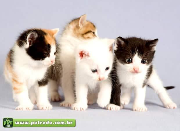 gatos-filhotes-petrede