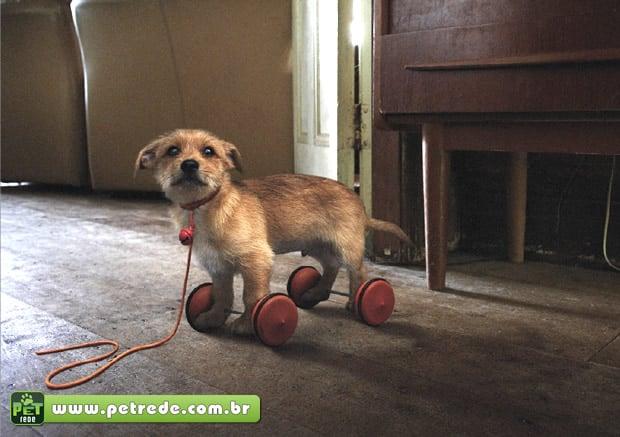 animal-nao-e-brinquedo-presente-petrede