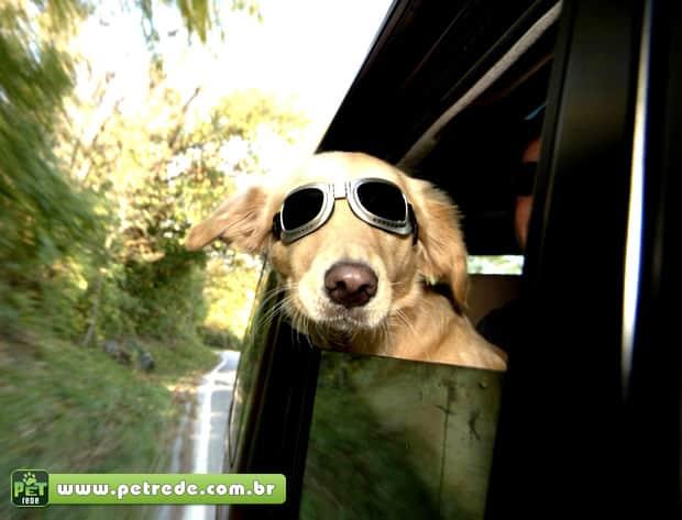 cachorro labrador oculos de sol janela carro Bom pra cachorro: pets ganham óculos escuros para curtir o Verão