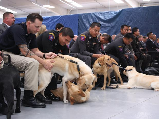 EFE-centro-treina-cachorros-para-a-guerra-contra-o-terrorismo