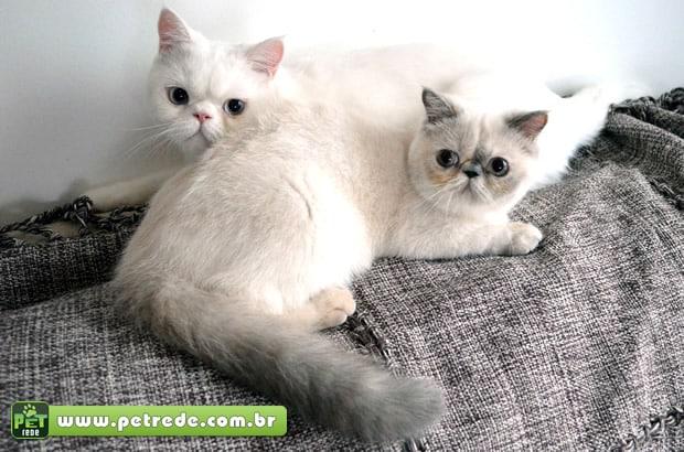 gatos-filhotes-fofos-leao-e-nana-lindos-de-morrer-petrede