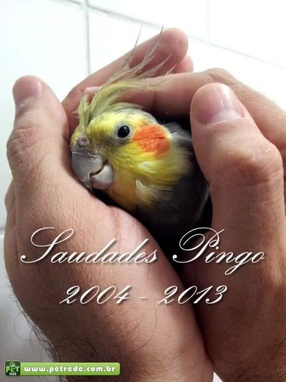 saudades-Pingo