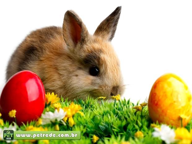 coelho-pascoa-ovos-petrede